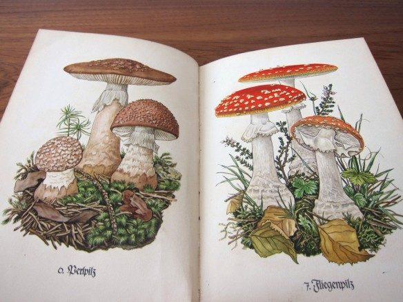 インゼル文庫のキノコの本